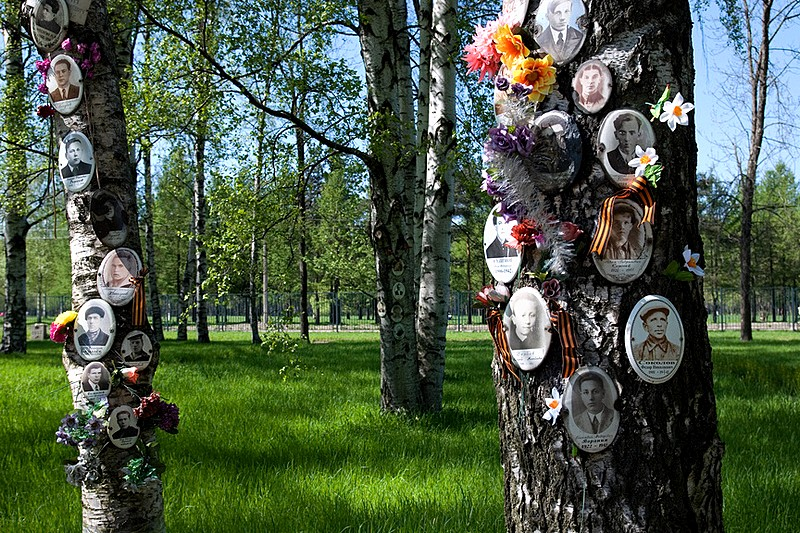 Birch trees planted in memory of victims of the Siege of Leningrad in St Petersburg, Russia