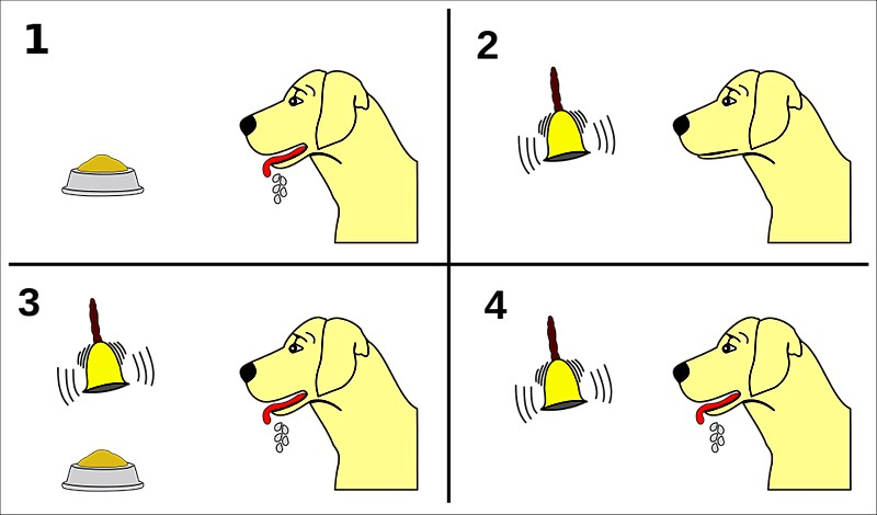 Diagram Ivan Pavlov's conditioning experiments with dogs
