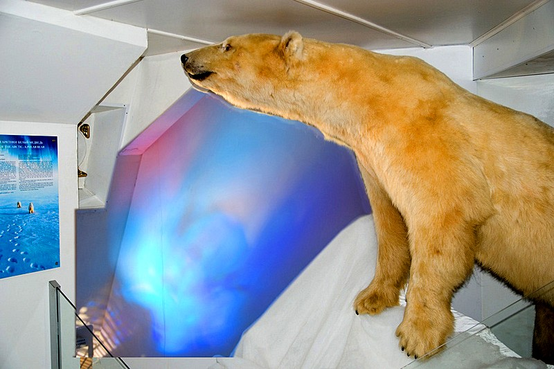 Stuffed polar bear at Icebreaker Krasin in St Petersburg, Russia