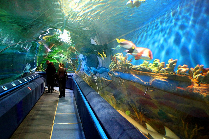 The main aquarium of the Oceanarium in Saint Petersburg, Russia