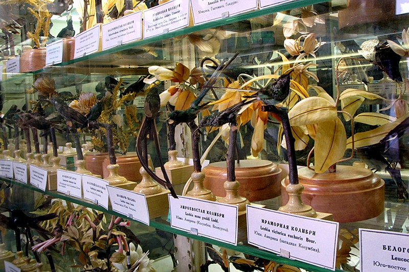 Collections of birds in the Zoological Museum in St Petersburg, Russia
