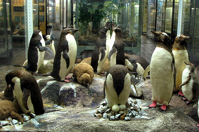 Penguins in the Zoological Museum in St Petersburg, Russia