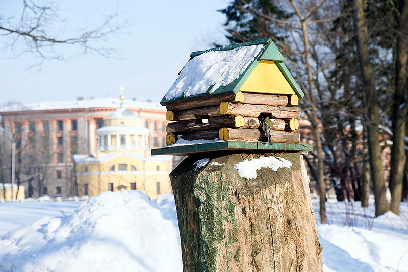 Feeding rack for birds in the park on Yelagin Island in Sant-Petersburg, Russia