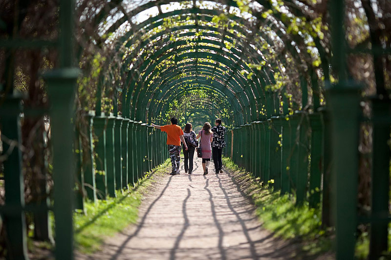 Shadowy Trellis in the Upper Garden in Peterhof, west of Saint-Petersburg, Russia