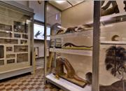 Zoological Museum, St. Petersburg, Russia